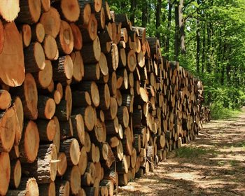 Cutting Timber, Foresters, & High-Grading Hardwood