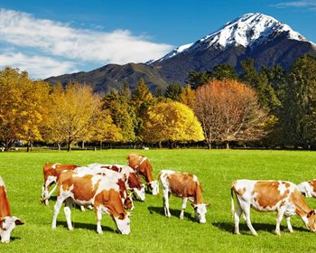 Ranch vs. Farm – What's the Difference?