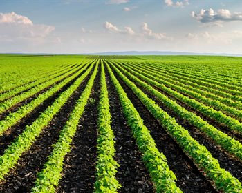 Technology is Key in the Future of Farming