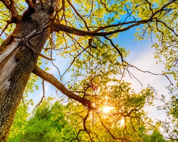Why Invest in Hardwood Forests?