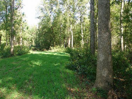 229 Acres Plus Weoka Creek : Equality : Elmore County : Alabama