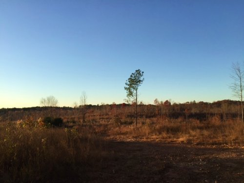 50 +/- Acres, Buchanan : Buchanan : Haralson County : Georgia