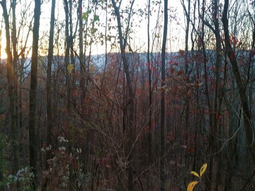 20+/- Acres Hunting Land : Whitwell : Marion County : Tennessee