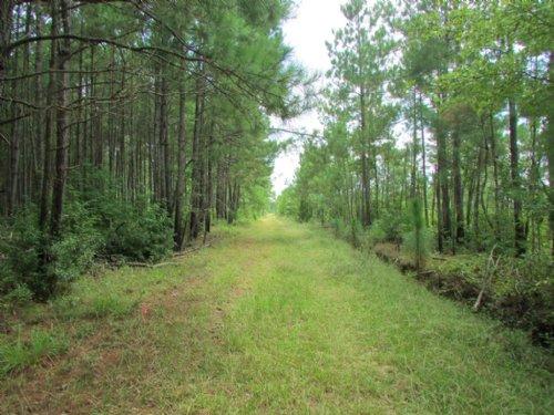Wee Tee Tract : Kingstree : Williamsburg County : South Carolina