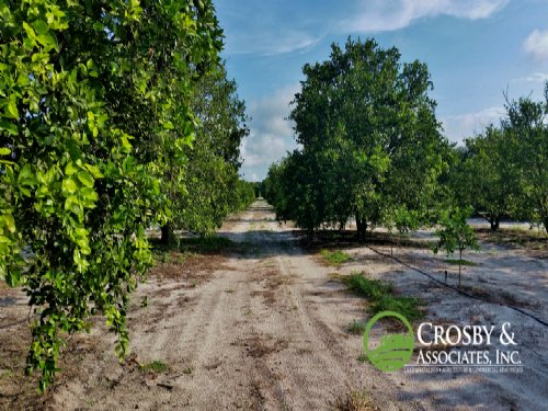 10 Acre Citrus Grove/investment Opp : Sebring : Highlands County : Florida