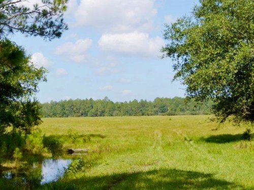 Clermont 80 Acres : Clermont : Lake County : Florida