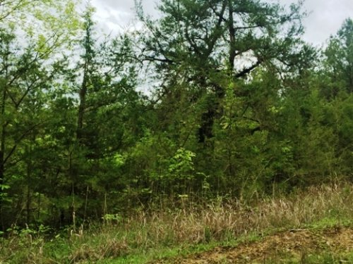 20 Acres Close To Noxubee Refuge : Starkville : Oktibbeha County : Mississippi