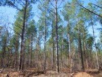 Beekman, Llc - Cheshire Tract : Sanford : Lee County : North Carolina