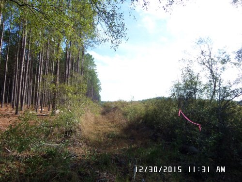 25 Acres On Owens Road : Odum : Wayne County : Georgia