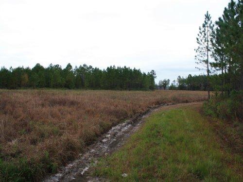 Jennings Timberland : Jennings : Hamilton County : Florida