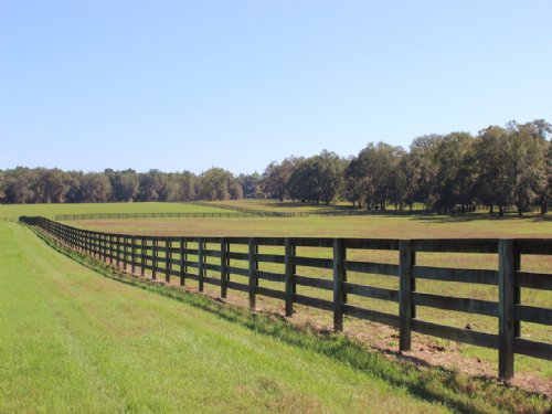 Oak Grove Farm : Madison : Florida