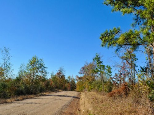 29.3 Acres Fm 1645 : Center : Shelby County : Texas