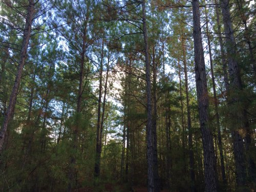 18 Acres Recreational Tract : Hazlehurst : Copiah County : Mississippi