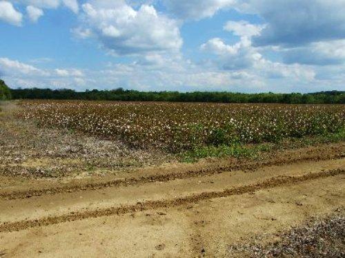 Cropland : Faunsdale : Marengo County : Alabama