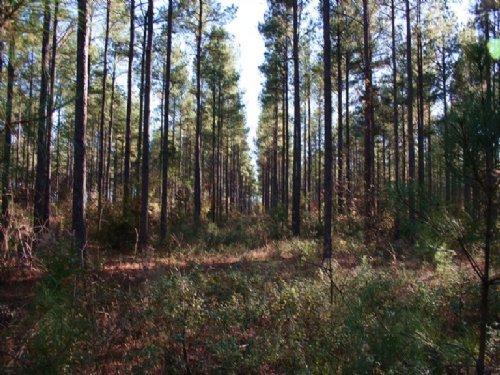 Adams Park : Bullard : Twiggs County : Georgia
