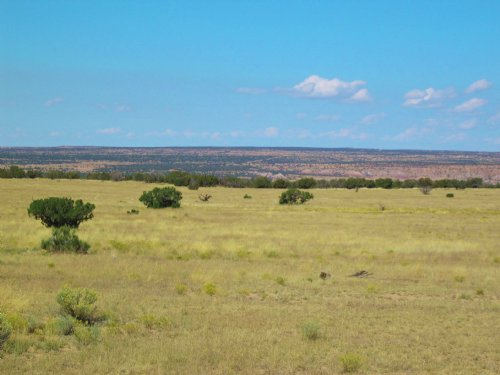 160 Acre Little Colorado River Farm : Concho : Apache County : Arizona