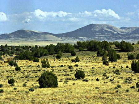 40 Acre Ranch : Show Low : Apache County : Arizona