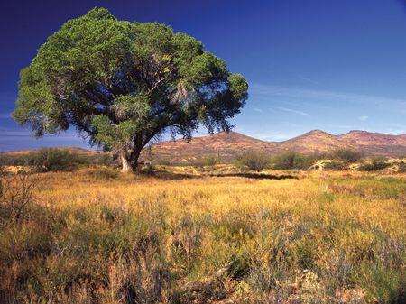 36 Acre Ranch : Willcox : Graham County : Arizona