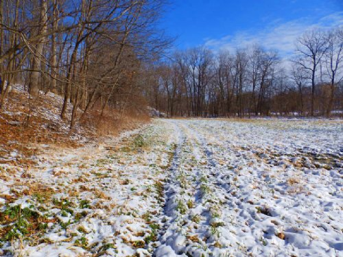 13 Acres Affordable Hunting Farm : Barry : Pike County : Illinois