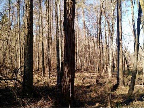 Arnold Caldwell Road : Carlton : Oglethorpe County : Georgia