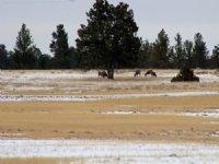 Tract 7 Hartland Ranches