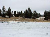 Tract 9 Hartland Ranches
