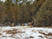 Tract 10 Hartland Ranches