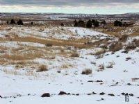 Tract 16 Hartland Ranches