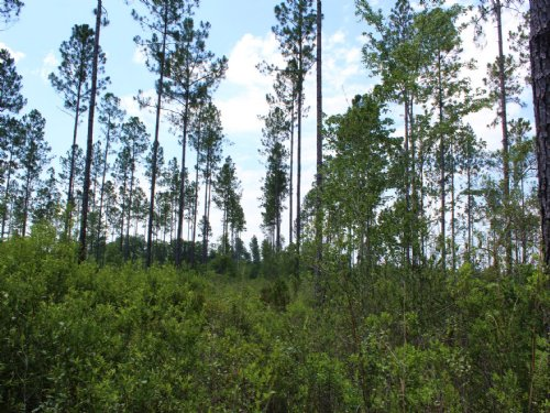 11.38 Acres - Lot 18 - Goodwin Road : Hilliard : Nassau County : Florida