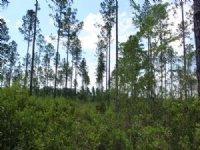 11.38 Acres - Lot 18 - Goodwin Road : Hilliard : Nassau County : Florida