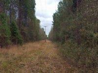 34.48 Acres : Darlington : Darlington County : South Carolina