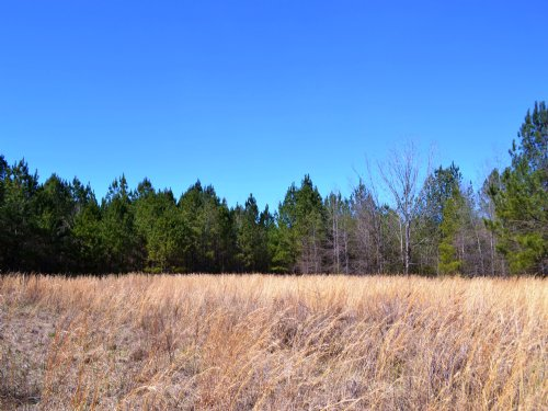 Gp Farms 159 +/- Acres : Hurtsboro : Bullock County : Alabama