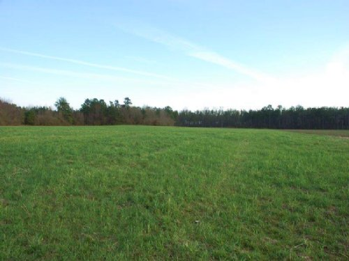 Nice Farm And Timberland Tract : Saint Pauls : Robeson County : North Carolina