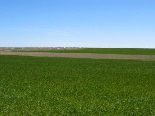 Ackerman Organic Dryland & Pasture : Kimball : Nebraska