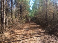 Bowman Tract On N Highway 28 : Bowman : Orangeburg County : South Carolina