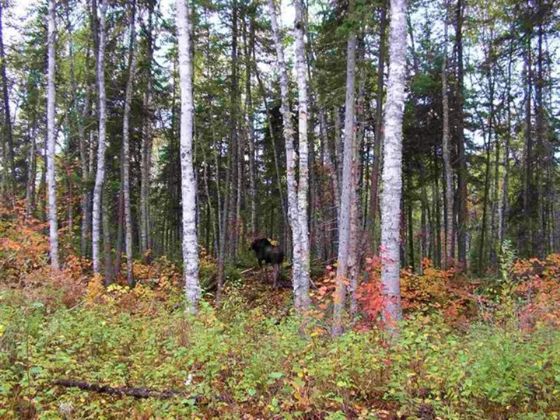 Peshekee Grade Rd., 1092359 : Lanse : Baraga County : Michigan
