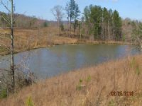 Rural Home Site And Timberland : Cleveland : Blount County : Alabama