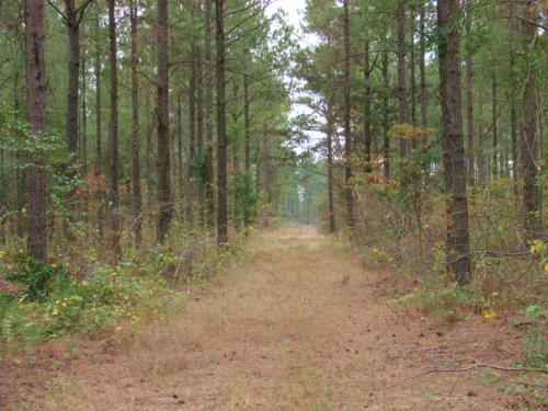 232 Timber Investment : Buena Vista : Marion County : Georgia