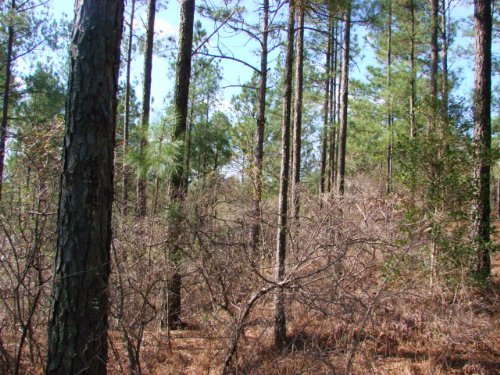 229 Acres Of Timber And Creek : Butler : Taylor County : Georgia