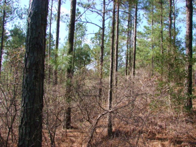 229 Acres With Timber And Creek : Butler : Taylor County : Georgia