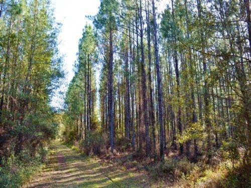 Twin Creeks Retreat : Green Cove Springs : Clay County : Florida