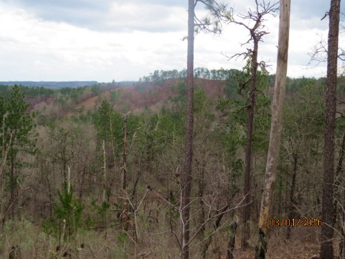 Hunting Land And Beautiful Timber : Rockford : Coosa County : Alabama