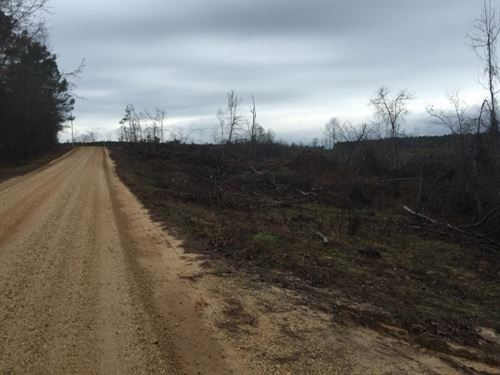 120 Ac - Replanted Pine Timberland : Fountain Hill : Drew County : Arkansas