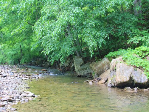 206 Acres Adj. National Forest : Covington : Alleghany County : Virginia