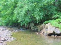 206 Acres Adj. National Forest : Covington : Alleghany County : Virginia