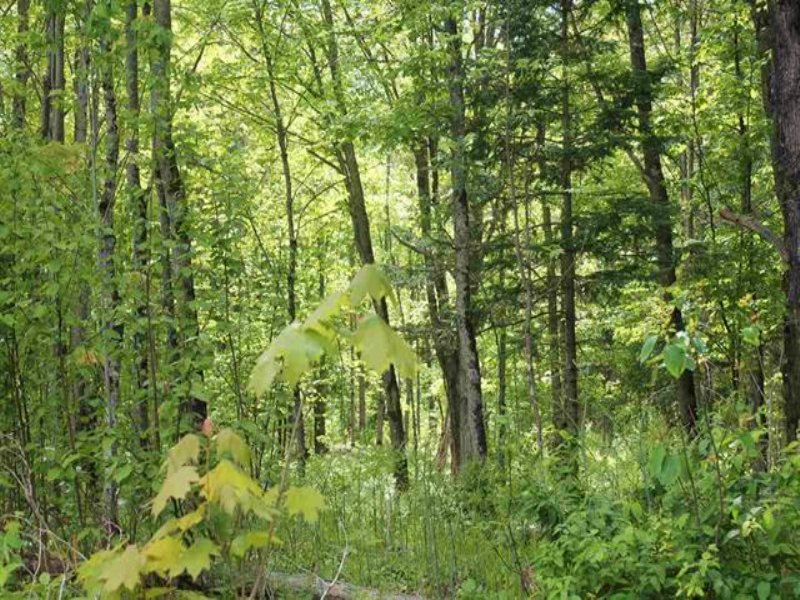 Off Kyllonen Rd, 1092749 : Nisula : Houghton County : Michigan