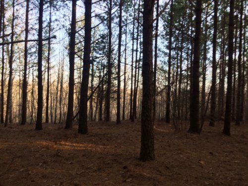 19.1+/- Acres - Views In The Ridges : South Pittsburg : Marion County : Tennessee