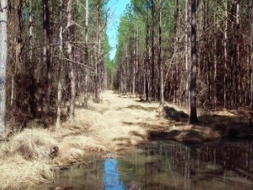 79 Acres Of Timberland : Butler : Choctaw County : Alabama