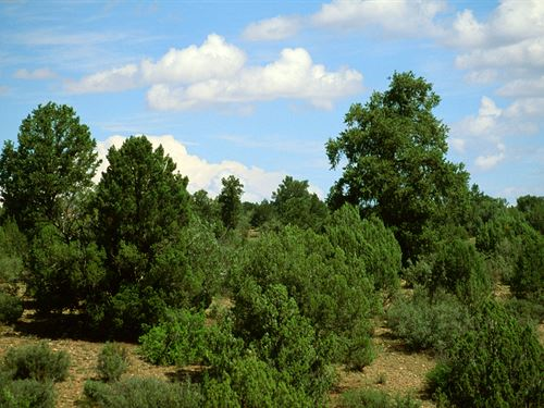 Northern Az Secluded Mountain Ranch : Saint Johns : Apache County : Arizona