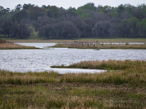 Lake Front 40 Acres : Brooksville : Hernando County : Florida